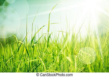 абстрактные, трава, задний план, природа