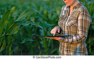 агроном, кукуруза, компьютер, таблетка, поле