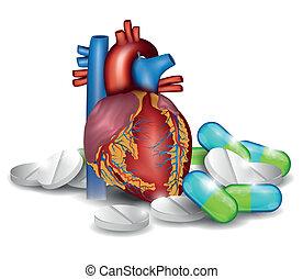 анатомия, сердце, pills., лечение