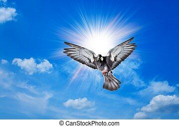 ангел, птица, небо