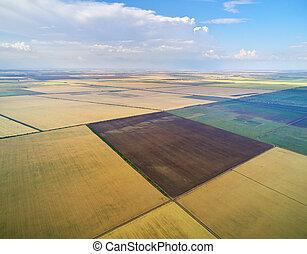 антенна, сельскохозяйственное, meadow., посмотреть