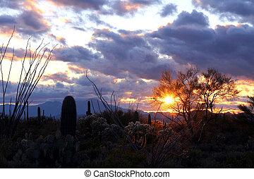 аризона, пустыня, закат солнца