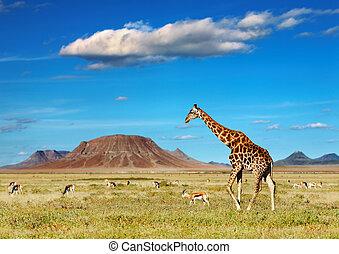 африканец, сафари