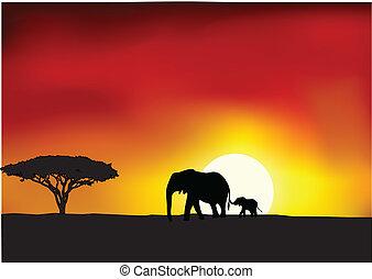 африка, закат солнца