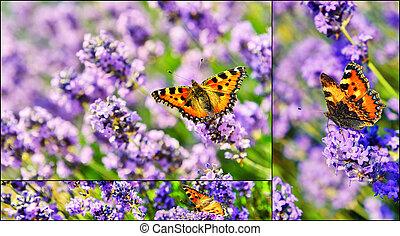 бабочка, коллаж, цветы, лаванда, blooming