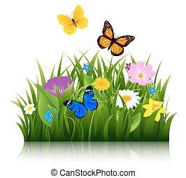 бабочка, лето, цветы