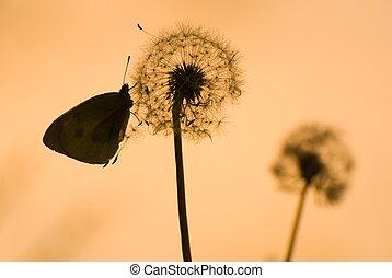 бабочка, одуванчик, солнечный свет, под