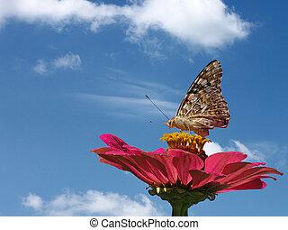 бабочка, цветок