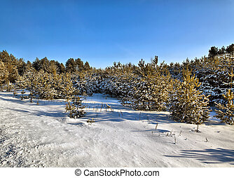 беларусь, дерево, зима, солнечный, день