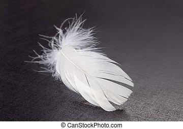 белый, перо, пушистый