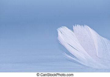 белый, перо