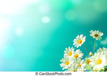 белый, цветы, небо, против, маргаритка