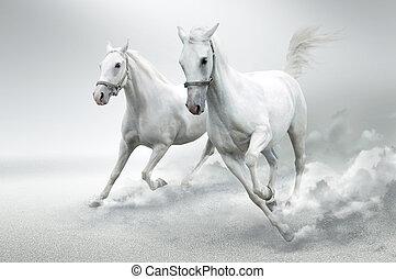белый, horses