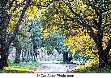 ботаника, мох, над, дуб, бухта, draped, жить, edisto, плантация, река, южная каролина