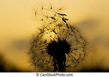 будем, летать, seeds, одуванчик