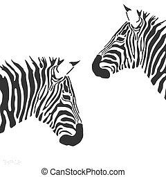 вектор, зебра