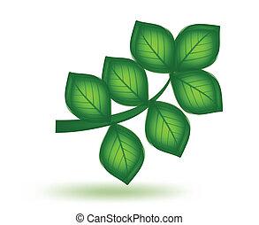 вектор, зеленый, leaf.