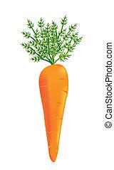 вектор, морковь