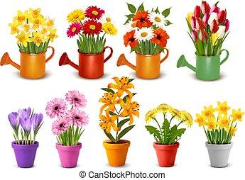 вектор, цветы, весна, мега, cans, лето, красочный, pots, vases., коллекция, полив