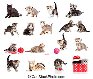 веселая, немного, kittens, collection., isolated, cats, white., adorable
