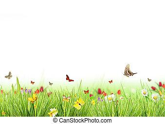 весна, белый, луг, задний план