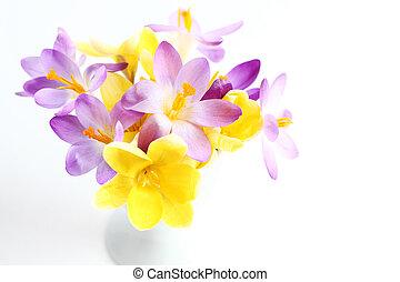 весна, белый, цветы, задний план