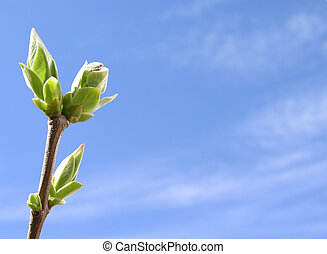 весна, время