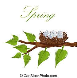 весна, гнездо
