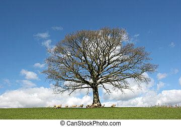 весна, дуб, дерево