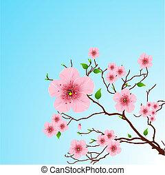 весна, задний план, цветочный