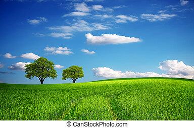 весна, зеленый, поле