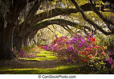 весна, испанский, дуб, trees, плантация, жить, азалия, мох, blooming, южная каролина, чарльстон, цветы, blooms