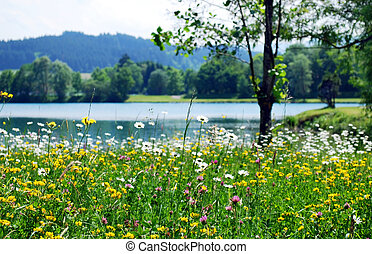 весна, луг