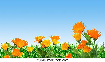 весна, поле