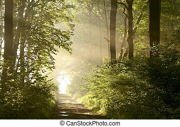 весна, рассвет, леса, дорожка