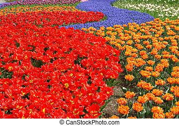 весна, цветок, постель