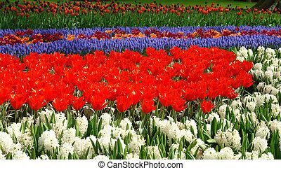 весна, цветок, keukenhof, постель
