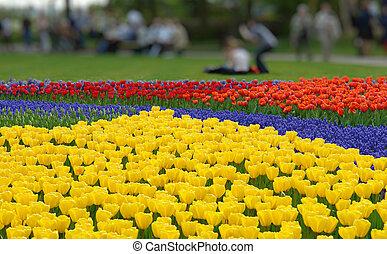 весна, цветок, keukenhof, постель, gardens
