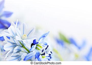 весна, цветы, задний план