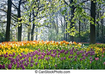 весна, цветы, легкий, апрель