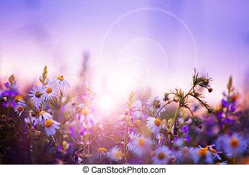весна, цветы, поле