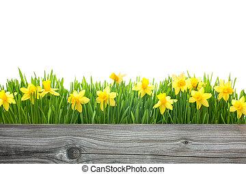 весна, цветы, daffodils