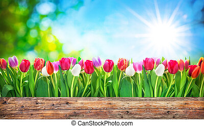 весна, цветы, tulips