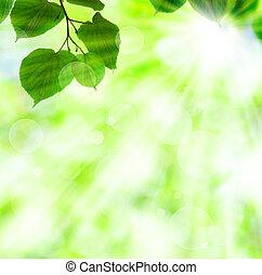 весна, leaves, солнце, зеленый, луч