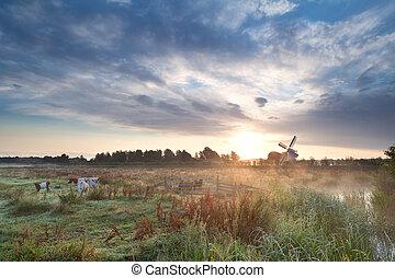 ветряная мельница, выгон, восход, крупный рогатый скот