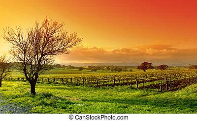 виноградник, пейзаж