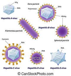 вирусы, eps10, гепатит, сравнение