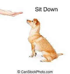 вниз, обучение, команда, собака, сидеть