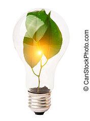 внутри, lightbulb, выращивание, растение