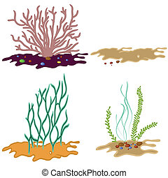 водоросли, задний план, белый, isolated